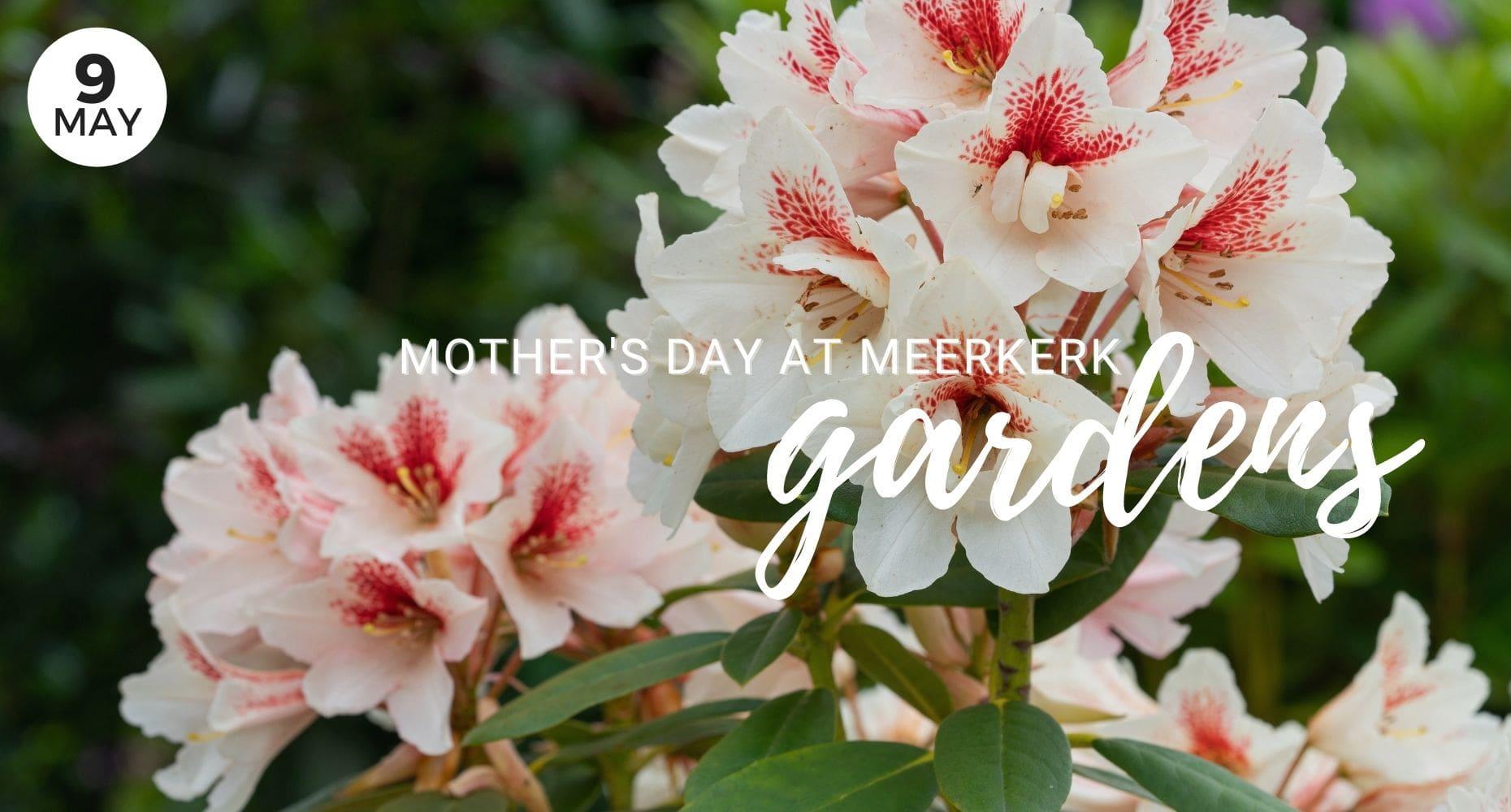 Mother's Day at Meerkerk Gardens