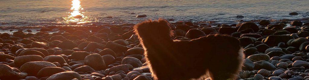 Pet on Beach