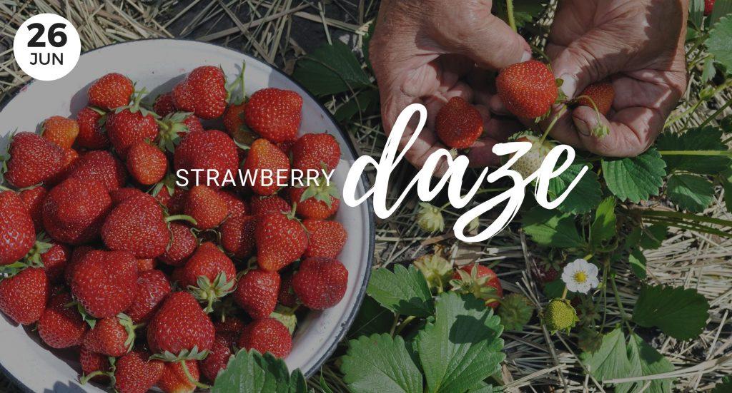 Strawberry Daze, Bells Farm, Whidbey Island, Washington, Event