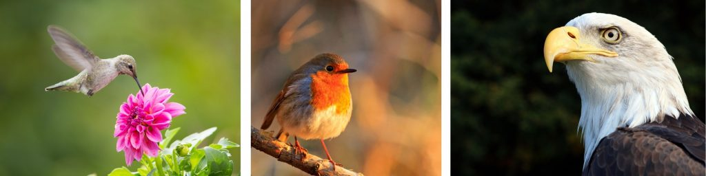 w, Birds, humming bird, Robin, Eagle