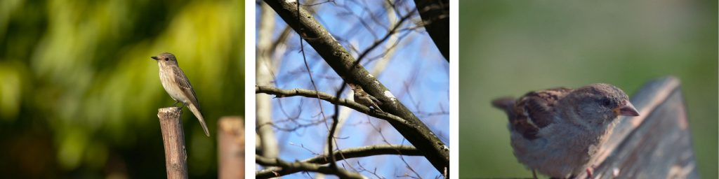 Songbirds, Birds of Whidbey, Birdwatching, Whidbey Island