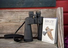 Birds of Whidbey, Windermere, real estate, Whidbey Island, Island life, birdwatching