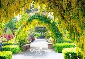 Yellow Laburnum Arbor - May 2021