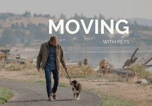 Moving with Pets, Don Jaques, Pets, Dog, Pet lovers