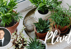 Plants-in-the-Home