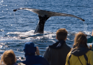 Best places for Whale Watching on Whidbey