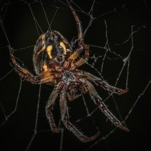 Nature's Halloween decorations, Whidbey Island, Spiders, Spider web